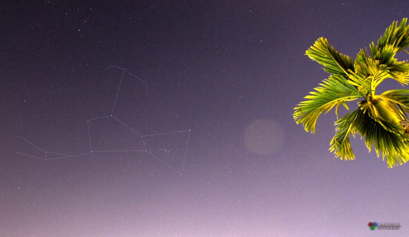 Karthik Easvur caught the constellation Orion on November 26, 2016, from his balcony in Hyderabad, India.  The round translucent object in the photo, by the way, is a lens flare - an internal reflection from Karthik's camera - like caused by the same artificial light that's illuminating the palm tree on the right.