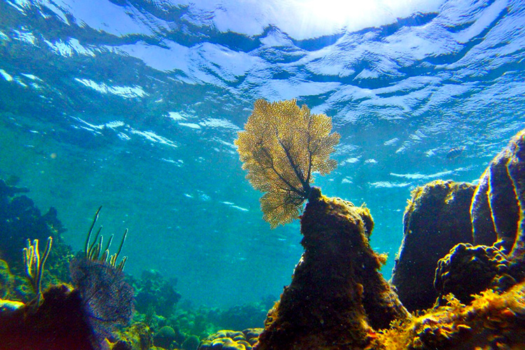 Underwater photo of rocky ocean floor and blue water with light coming through, corals on rocks.