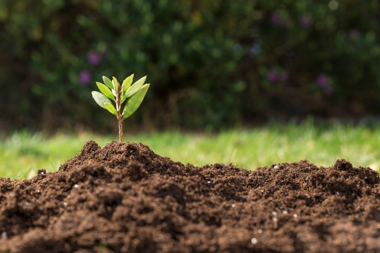 Organic Products and Soil Improvers | Soil Fertility with Organic Fertilizers | Fitochem