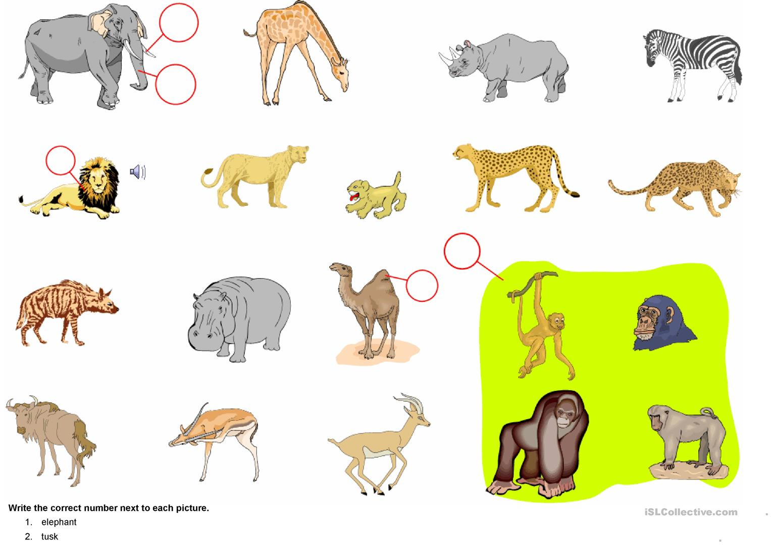 African Animals Worksheet