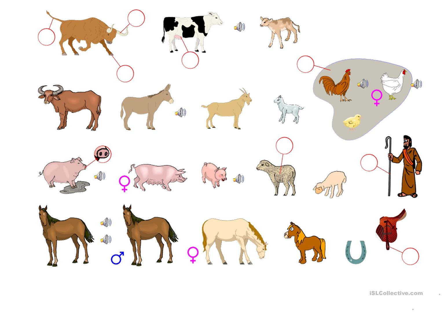 Worksheet On Domestic Animals