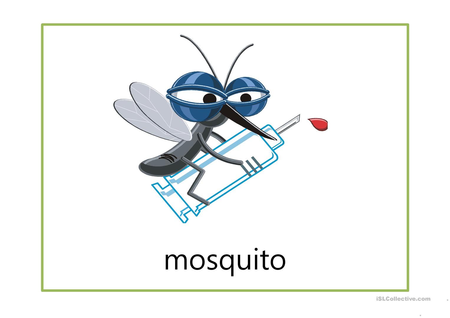 Flash Cards Insects Worksheet