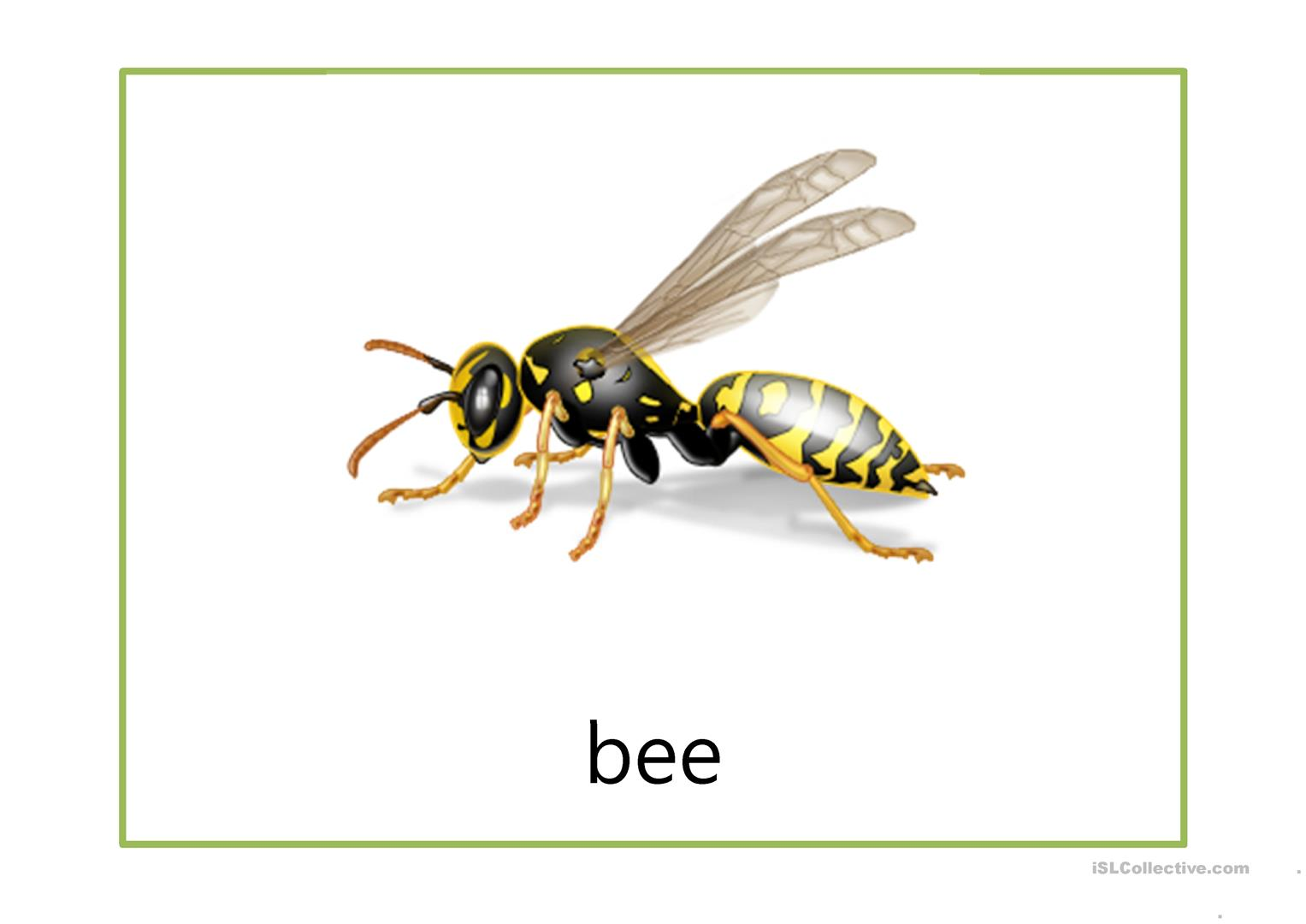 Flash Cards Insects
