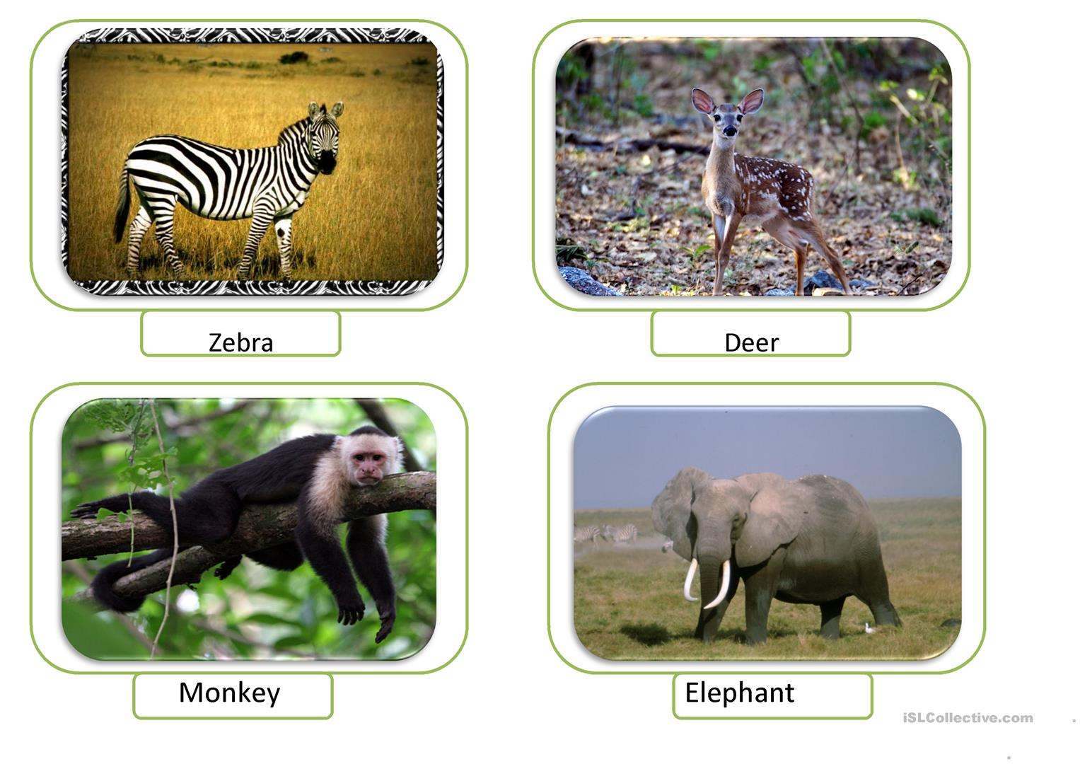 At The Zoo Animals Worksheet