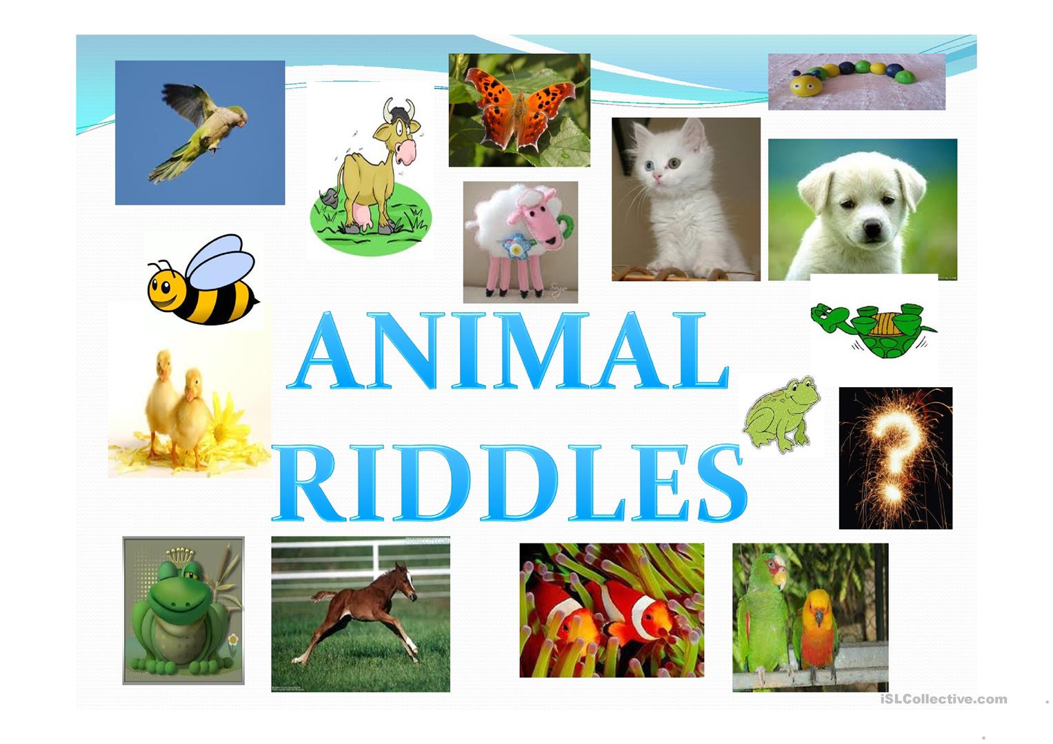 Animal Riddle Worksheet