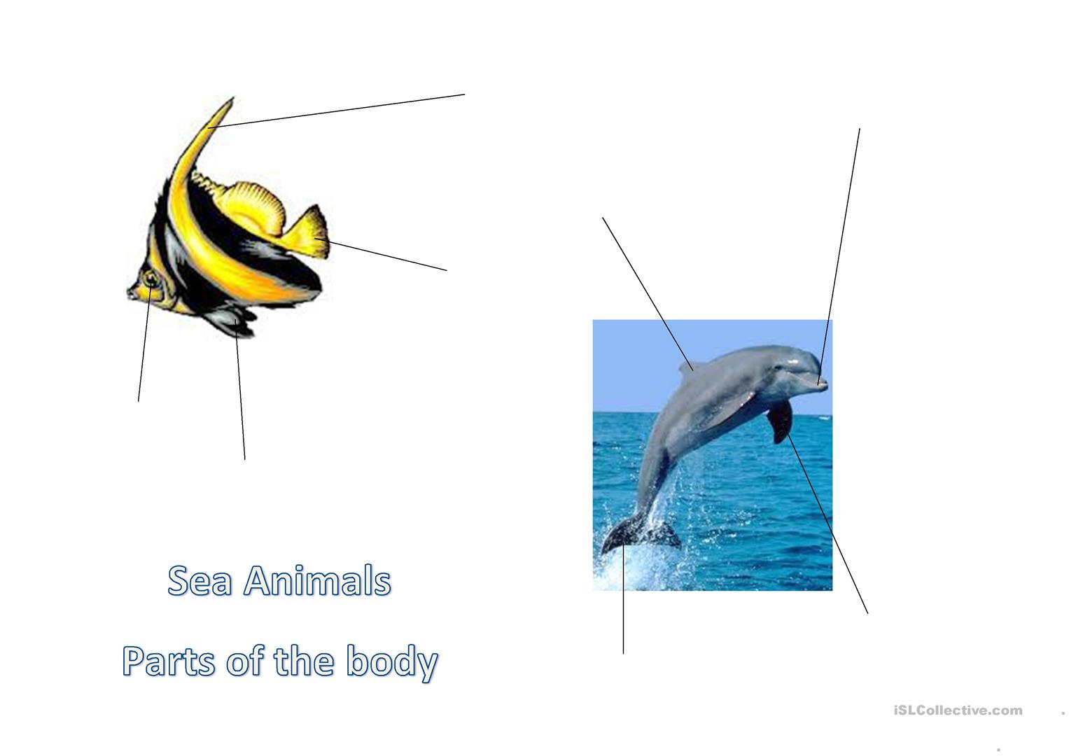 Parts Of The Body For Sea Animals Worksheet