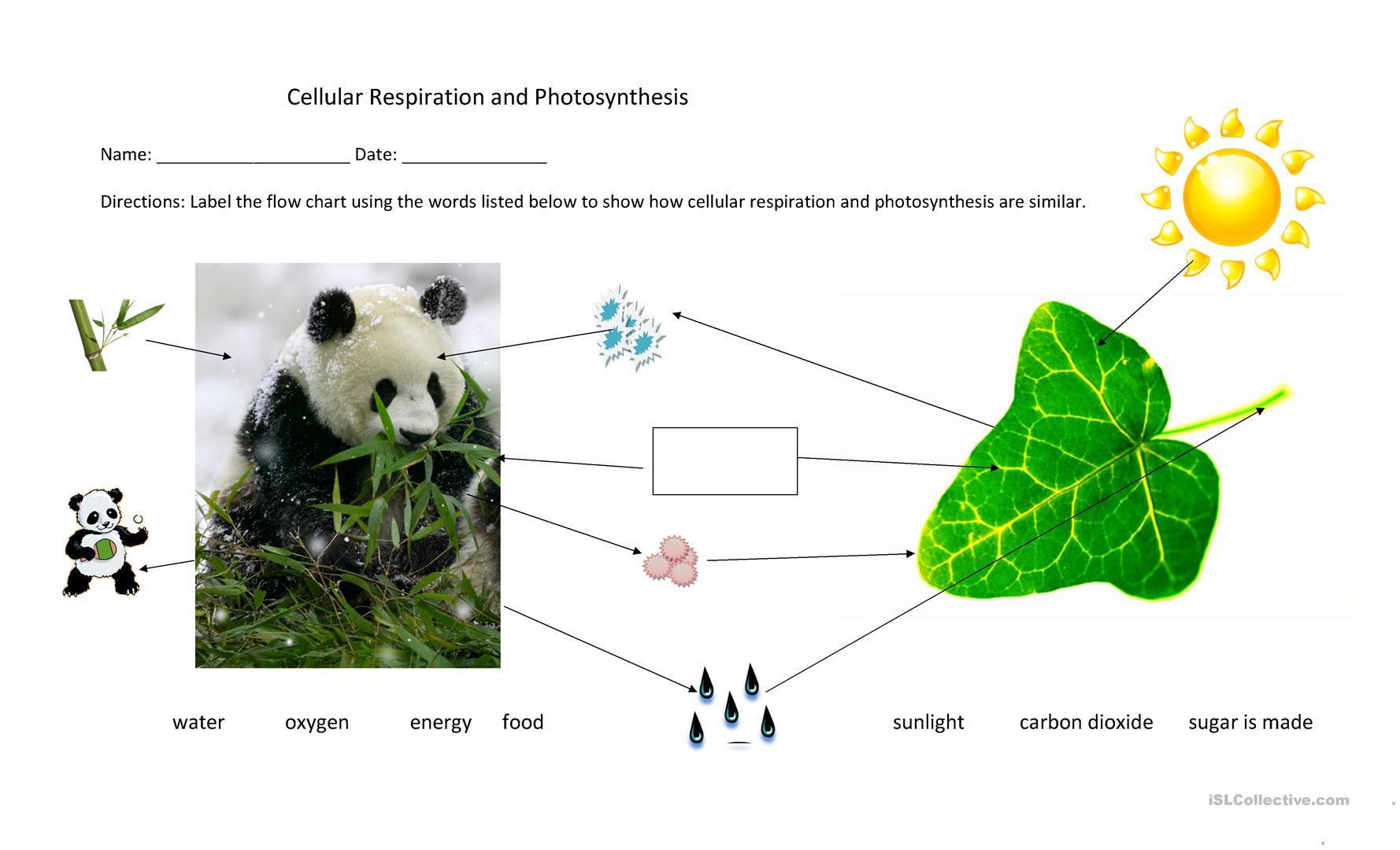 Cellular Respiration And Photosynthesis Flow Chart