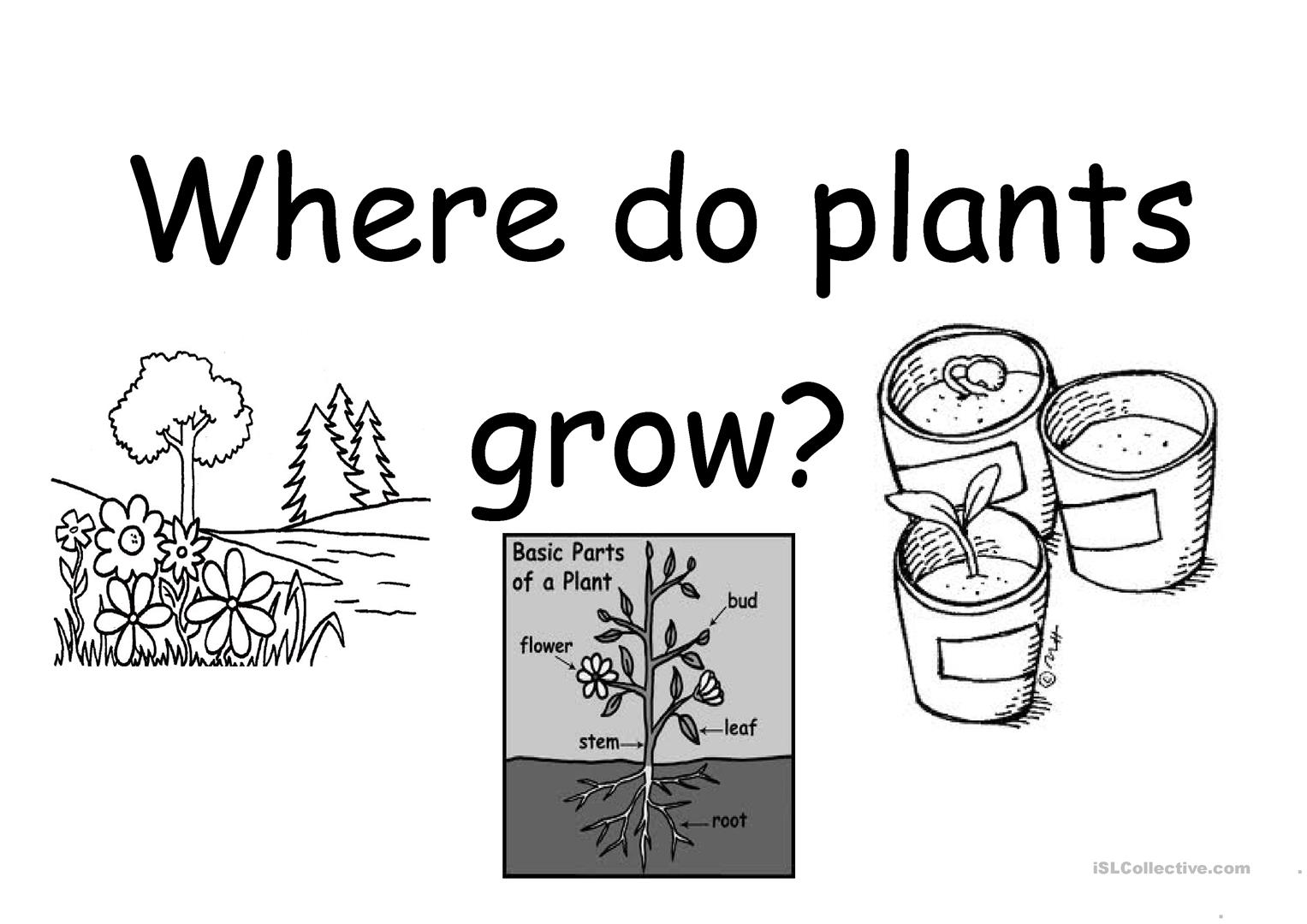 From Seed To Plant Worksheet