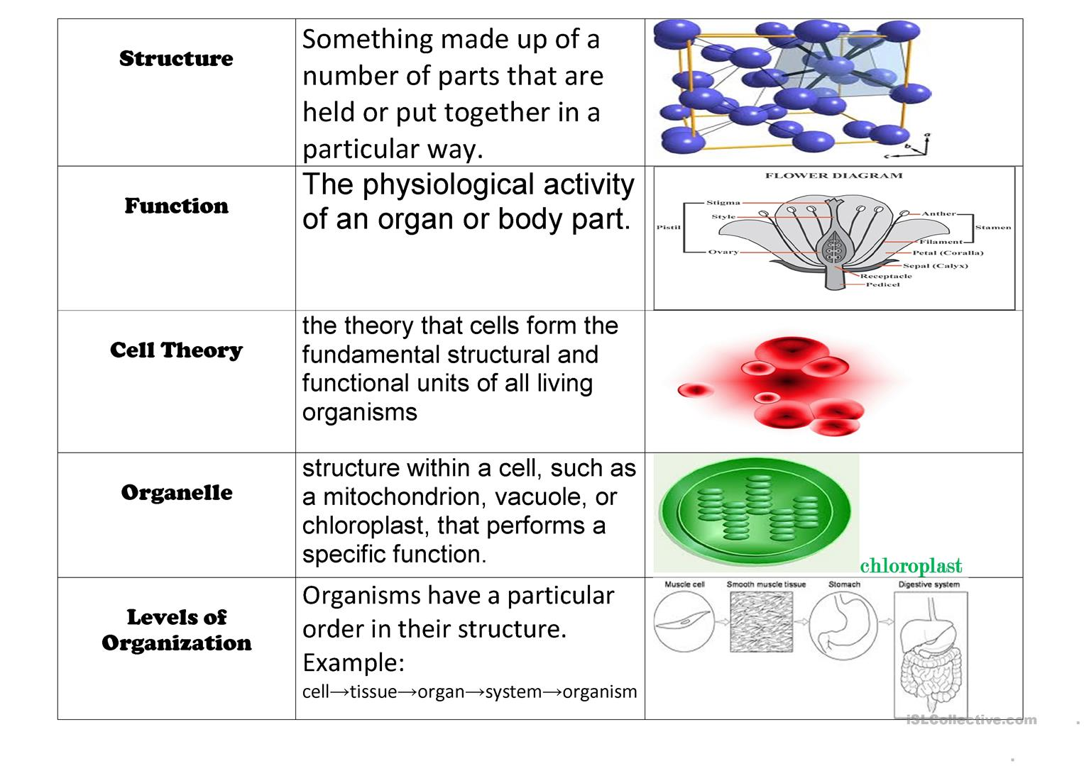 Cell Vocabulary Chart Worksheet