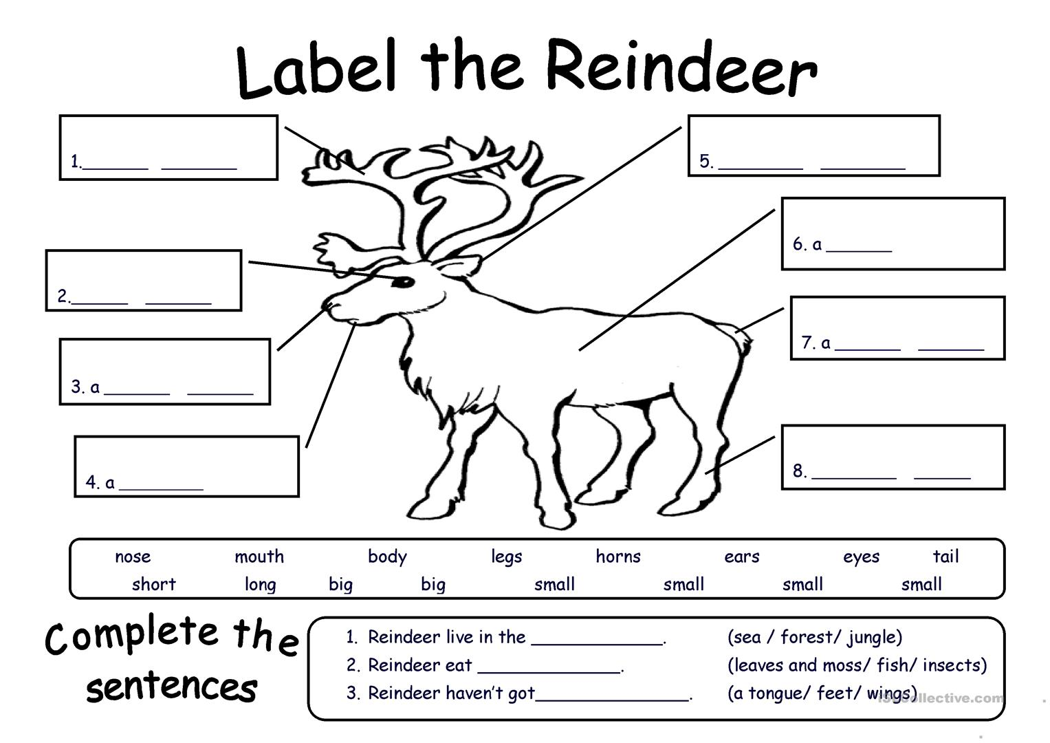 Label The Reindeer Worksheet