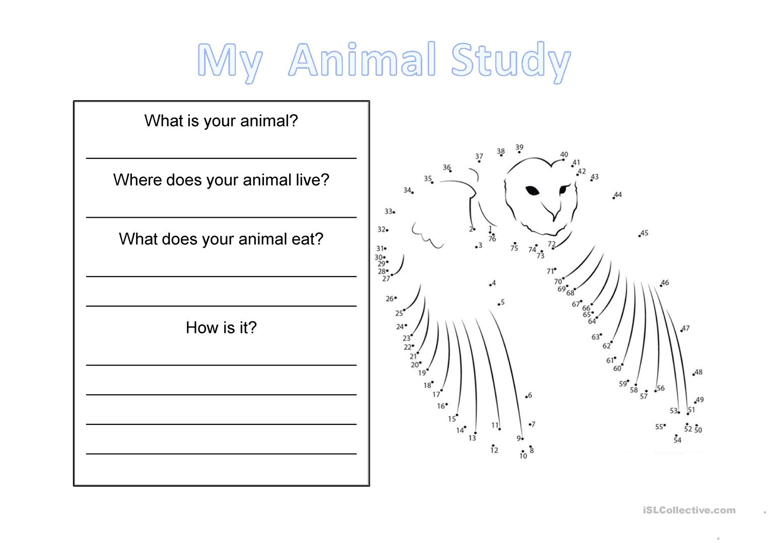 Wild Animal Study Worksheet