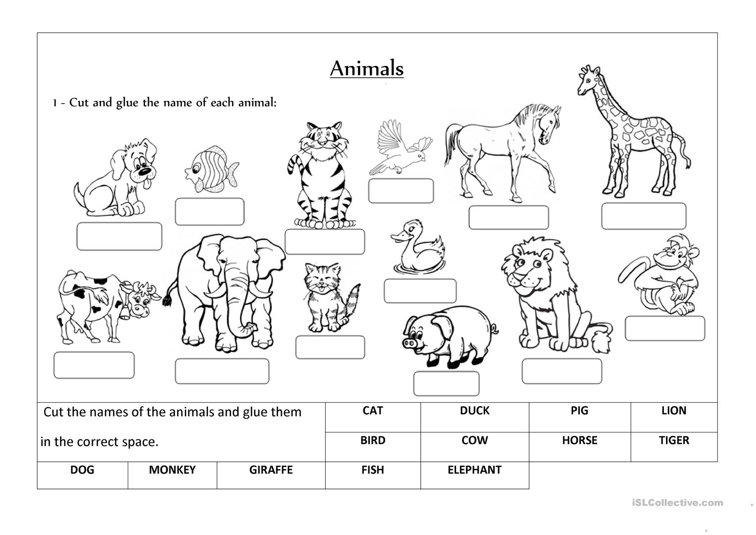 Classifying Mammals Worksheet