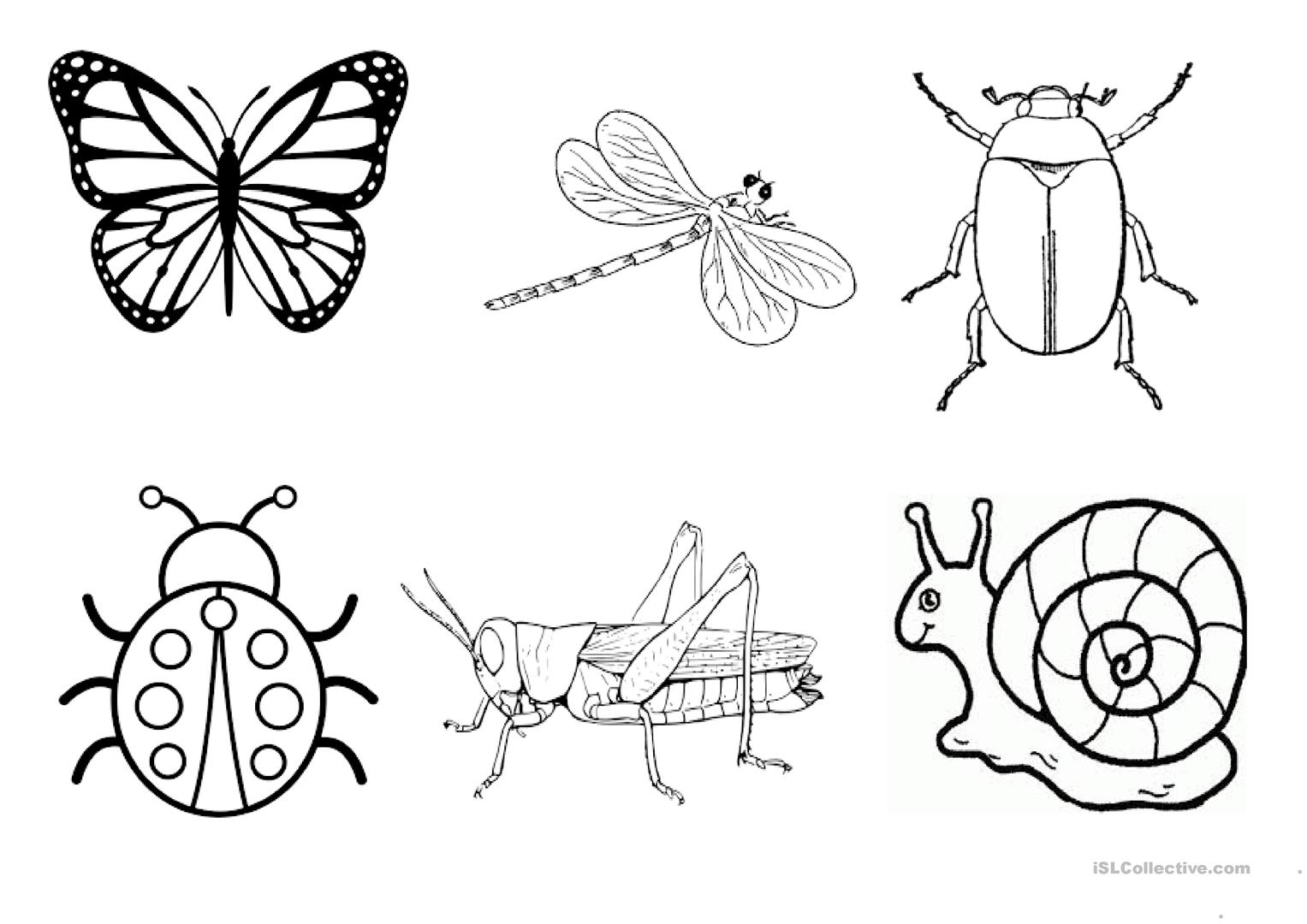 Kindergarten Insect Worksheet Esl
