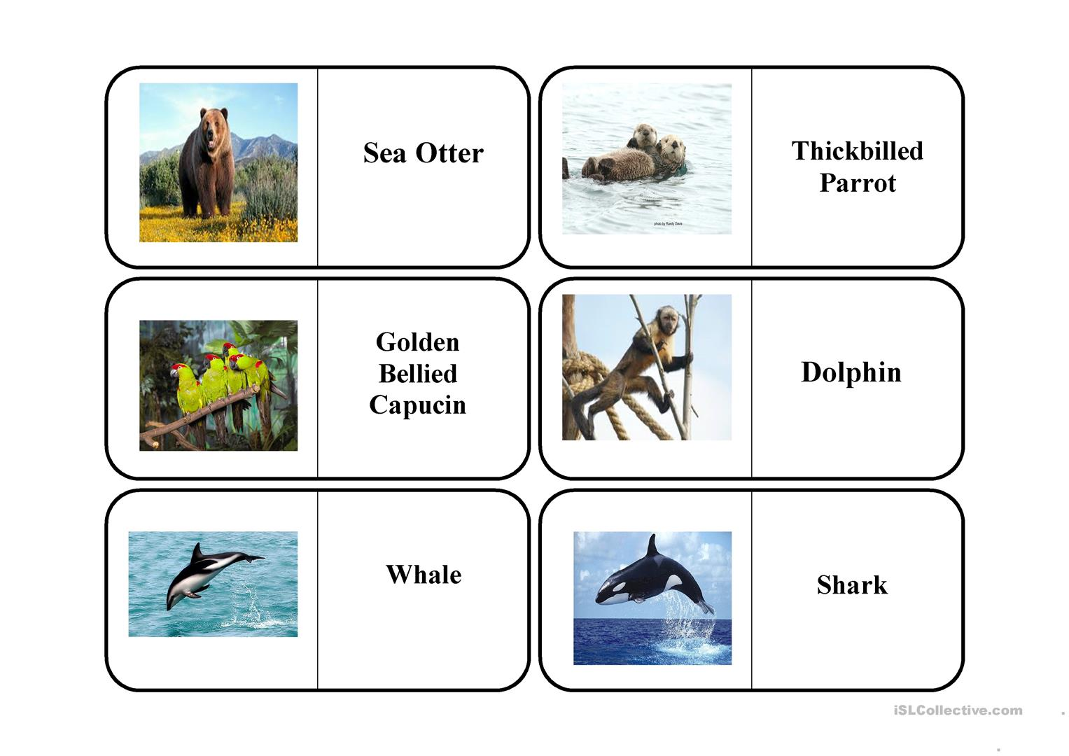 Endangered Animals Worksheet
