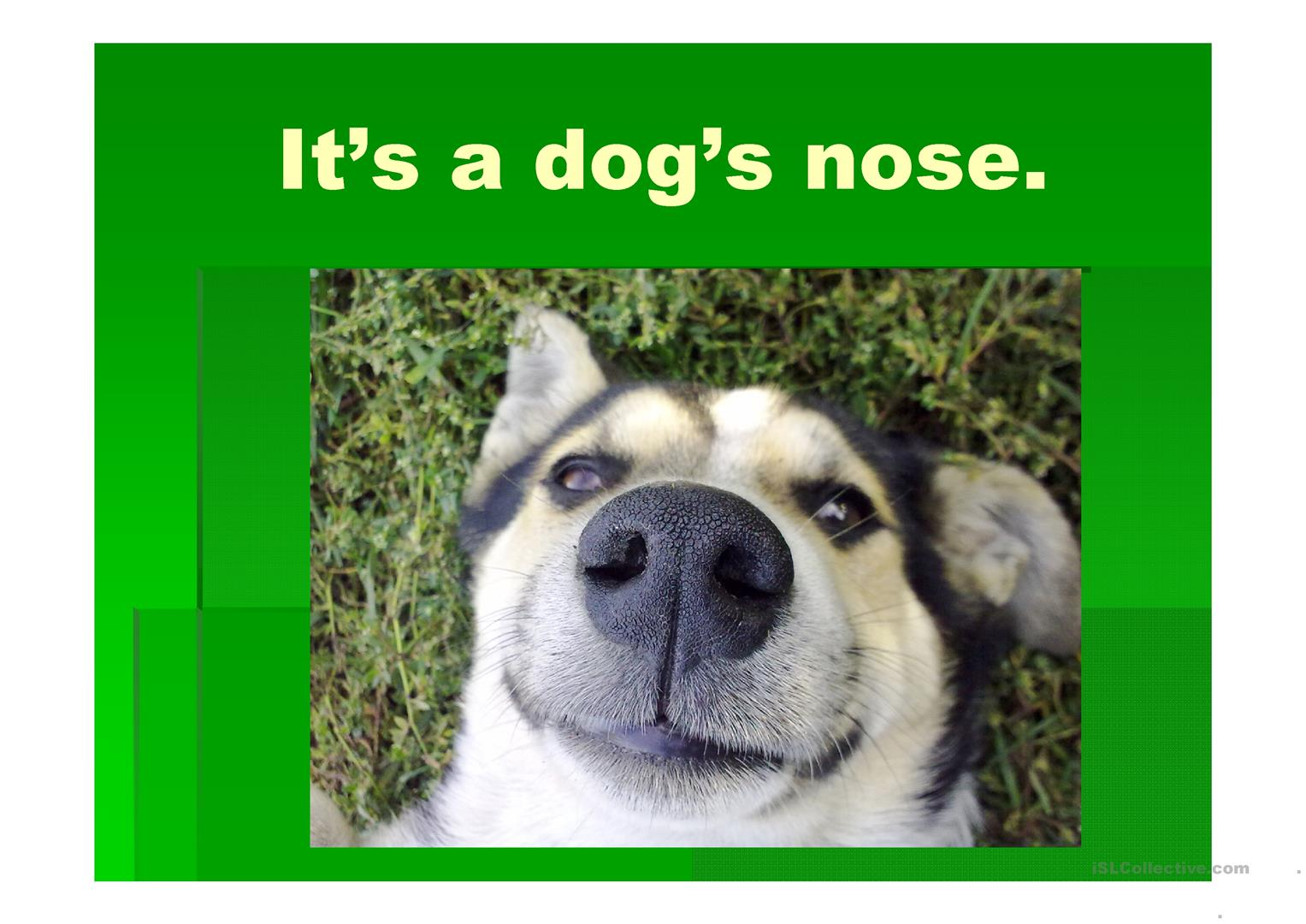 Whose Nose Is That Possessive Case Worksheet