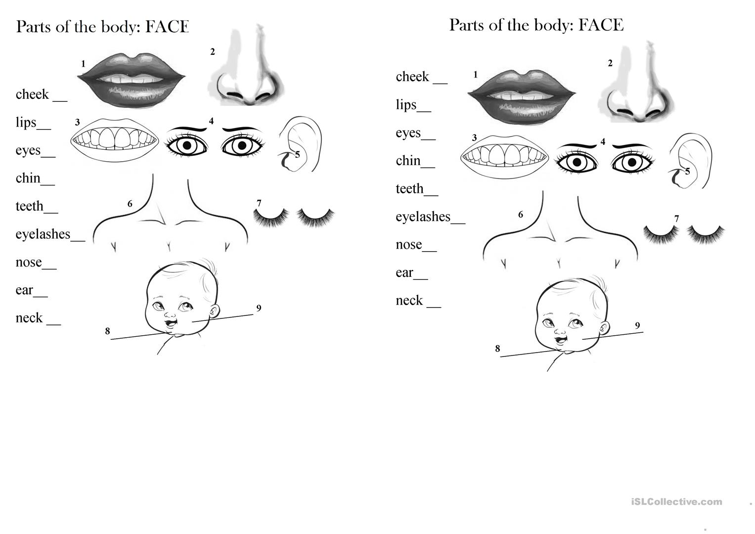 Parts Of The Body Face