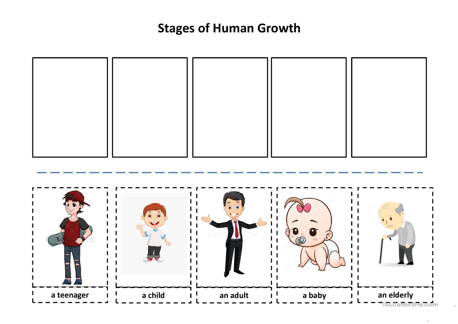 Stages Of Human Growth Worksheet