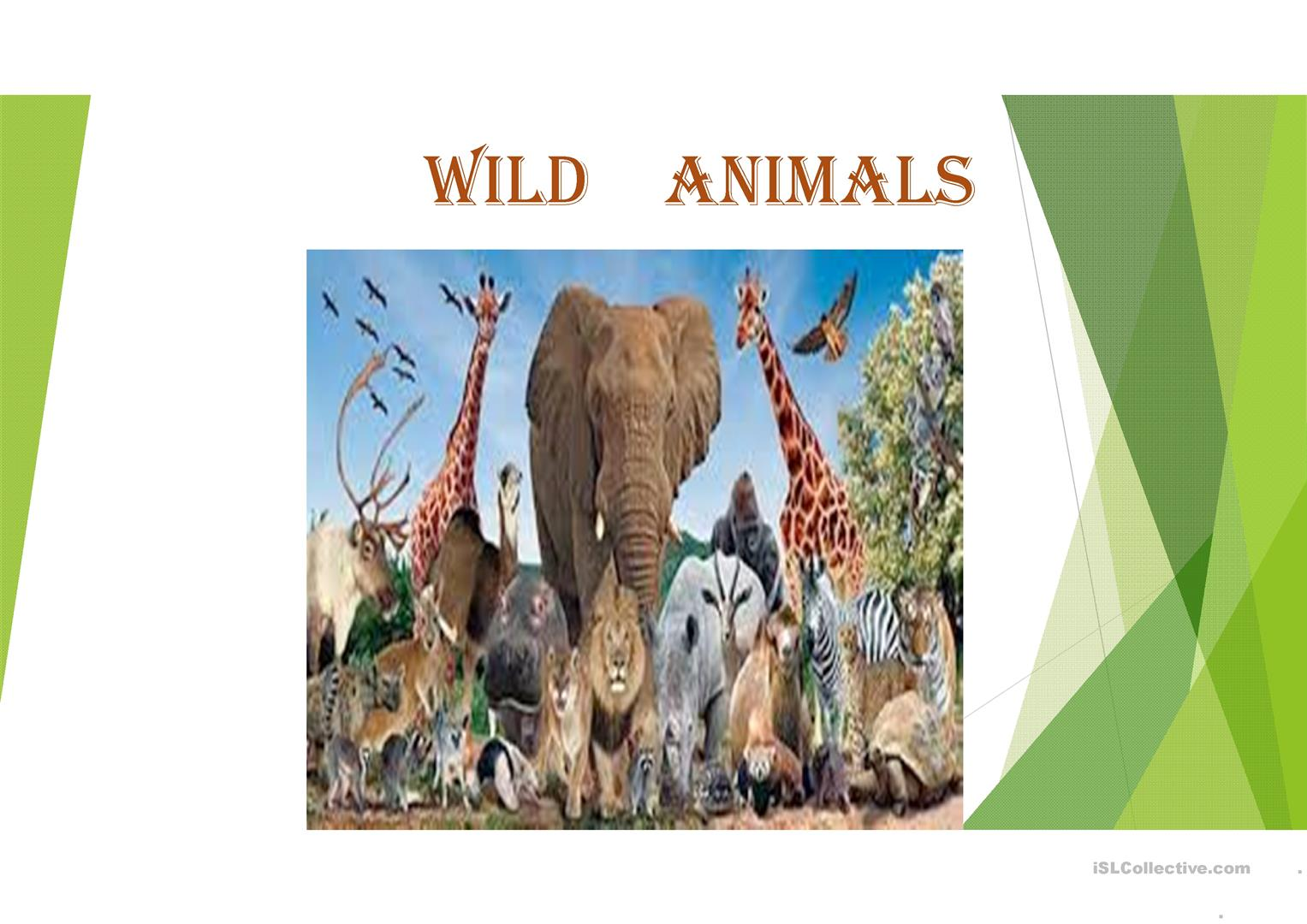 Adjectives And Wild Animals