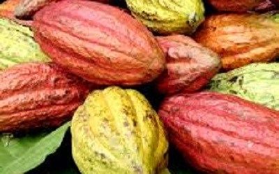 WEST SULAWESI SEEKS INVESTORS FOR COCOA INDUSTRY