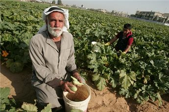 PALESTINIAN FARMERS CONTINUE TO FACE HARDSHIP MONTHS AFTER GAZA WAR