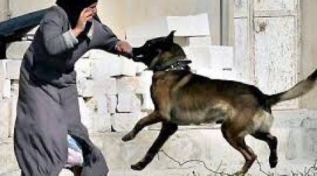 ISRAEL DOG ATTACK ON PALESTINIAN BOY 'SADISTIC'
