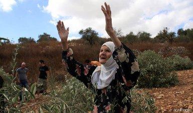 ISRAELI SETTLERS BURN 250 OLIVE TREES IN BETHLEHEM