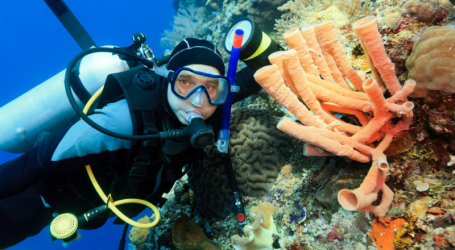 Indonesia Won Award as Most Beautiful Diving Destination