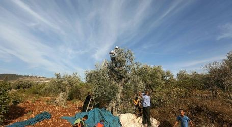 IOF Forces Palestinian Farmers to Leave Their Lands in Nablus