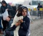Israel Blocks Palestinians from Selling Lambs in Jordan Valley