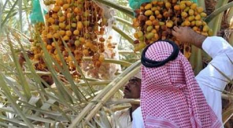 Saudi Distribute 319 Tons of Dates for Refugees in Jordan