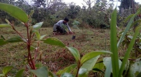 Indonesia Supports Waqf Forest for Environmental Sustainability