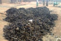 Collection of manure