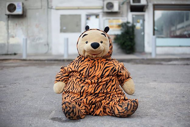 tiger suit project winnie