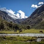 Pastures with a unique view