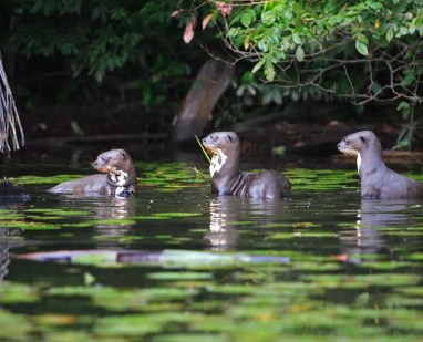 The inexhaustible flora and fauna of Manu National Park