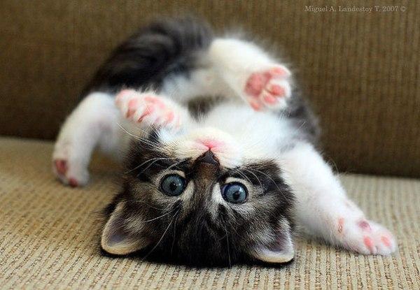 Unbelievably cute animals! (ADORABLE PHOTOS ...