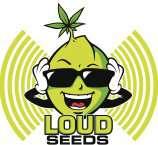 Loud Seeds Strawberry Durban Diesel