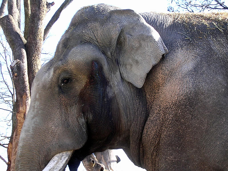 Image result for musth
