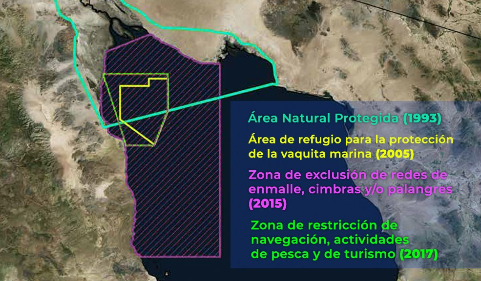 conservación de vaquita marina en Alto Golfo de California