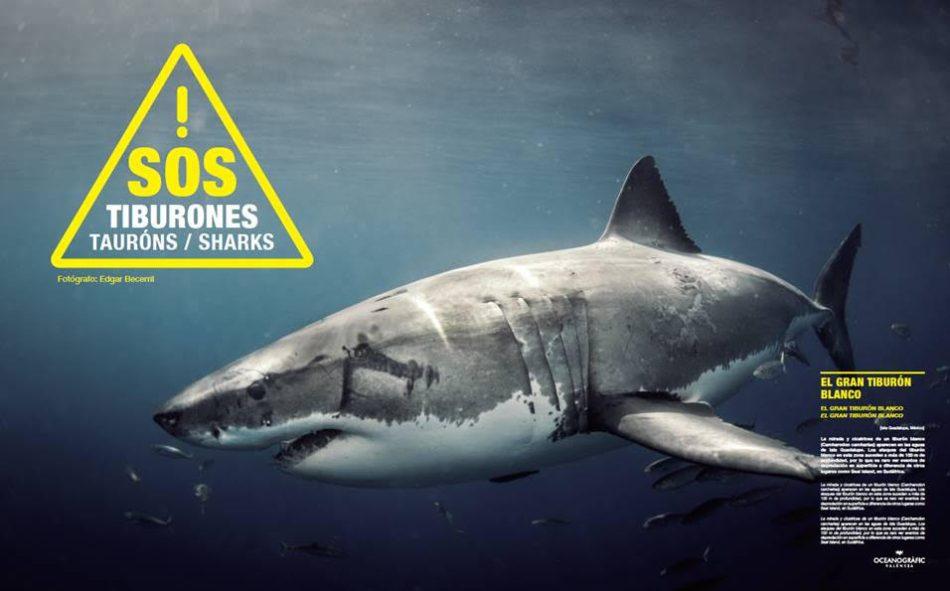 IPN tiburones