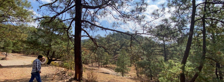 cambio de uso de suelo en terrenos forestales