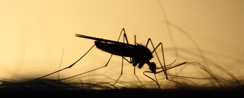 Qué es la malaria o paludismo y cuáles son los síntomas