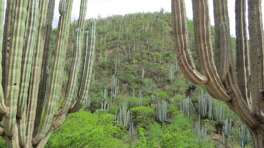 Reserva de la Biosfera Tehuacán - Cuicatlán