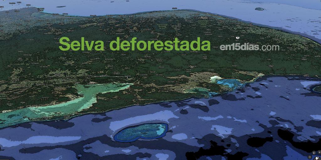 Quintana Roo Selva