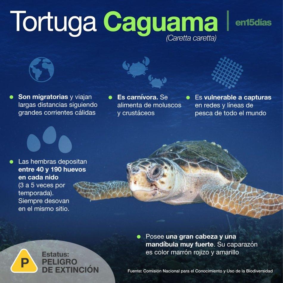 muerte de tortugas caguama en México
