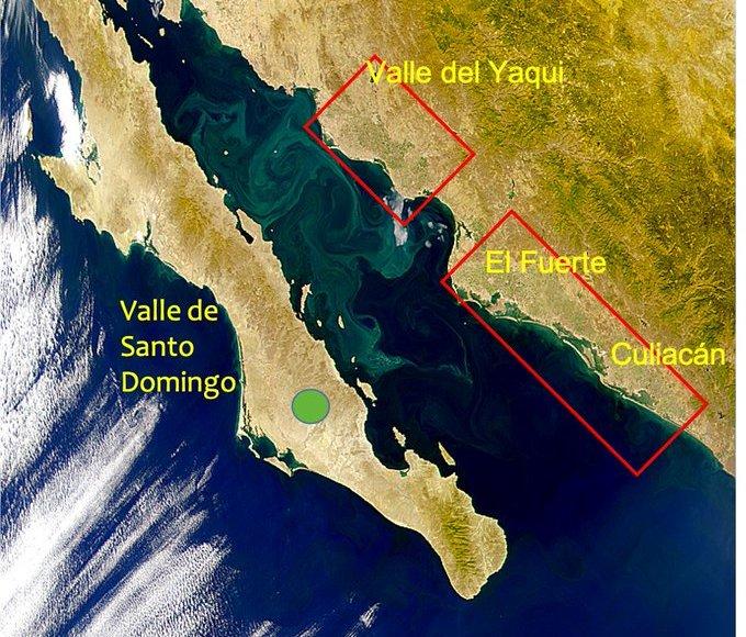 especies del Golfo de California