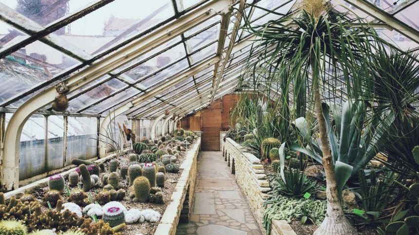 Plantas de moda: Invernadero de cactus