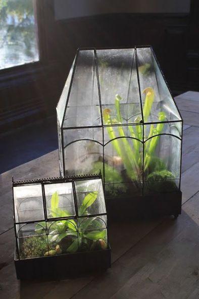 Plantas Carnívoras en invernadero