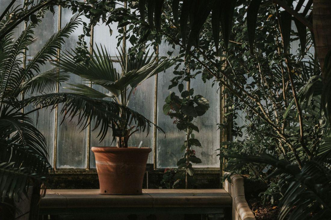 Imagen de planta Dársena Marginata