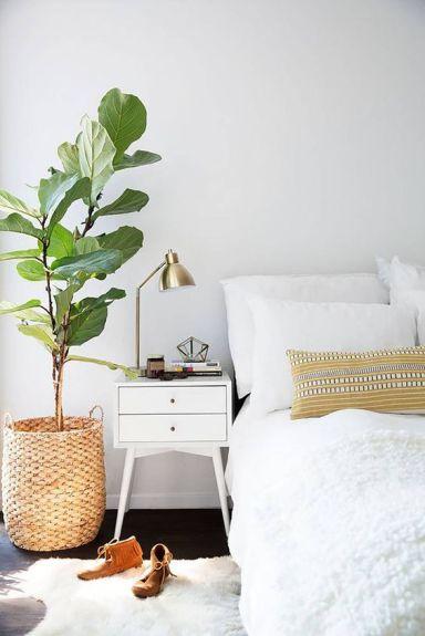 Imagen de planta ficus lyrata